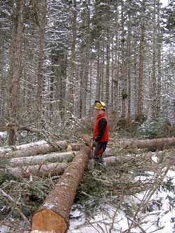 Sustainable Forestry on Cape Breton Island